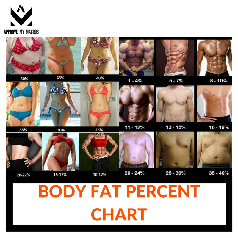 Your Body Fat Percentage